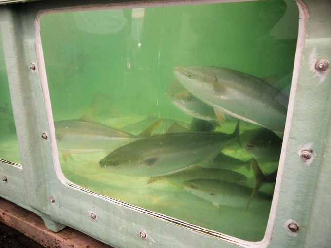 目の前を泳ぐ新鮮な魚も買える活魚即売コーナー