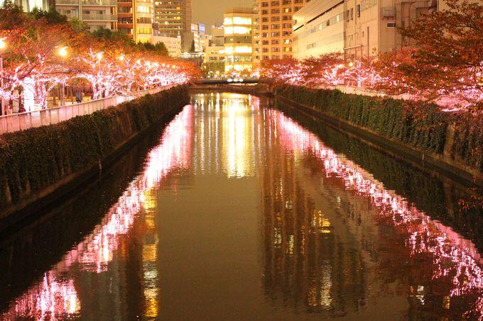 水面に映り込む冬の桜も必見!