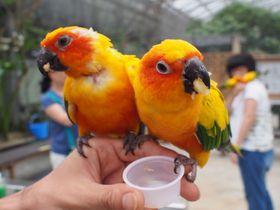 家族みんなで楽しもう!静岡「掛川花鳥園」はグルメやスイーツも充実