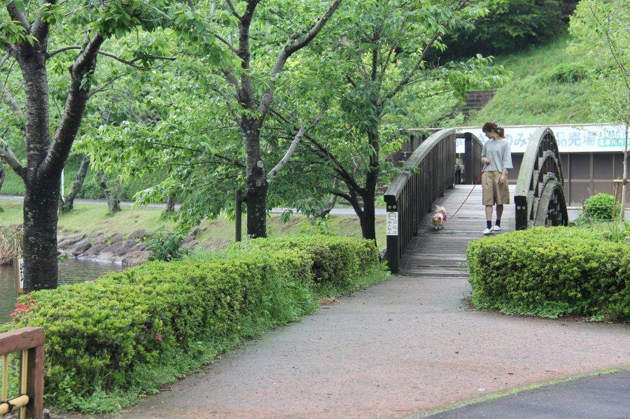 ワンちゃんと一緒に温泉に!鹿児島・藺牟田池畔「CoCoフォレいむた」の貸切風呂はペットと入浴できる!
