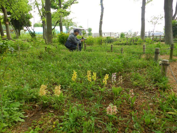 〜石神井の野草〜野草観察園で野に咲く貴重な花を楽しもう!