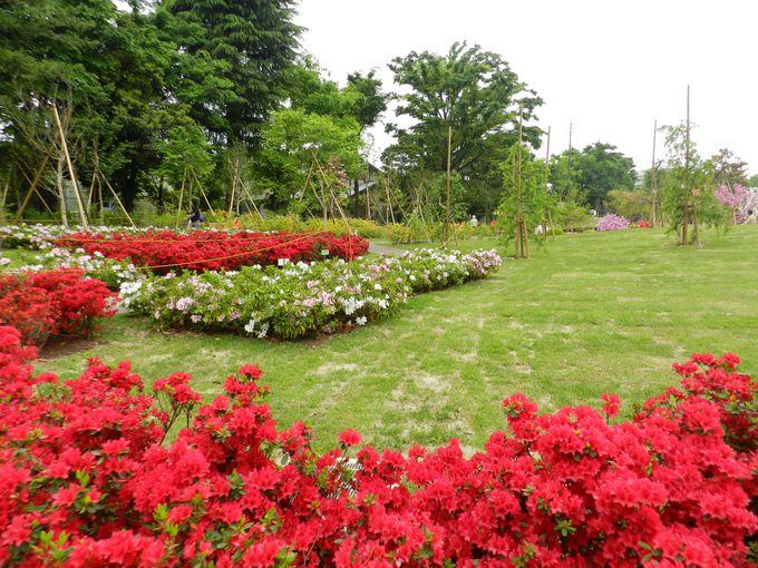 〜石神井の花畑〜2014年4月誕生!ツツジの咲き誇る石神井松の風文化公園
