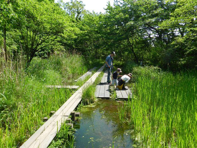 深い森の中に、湿地・野原・水辺など様々な環境が整う名スポット