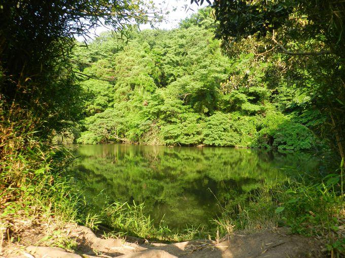 ヨシ原を奥に進んだ先に、静かな泉が……