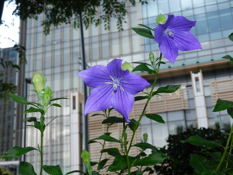 東京ミッドタウンのお隣! 六本木ビル街の和風庭園『檜町公園』へ
