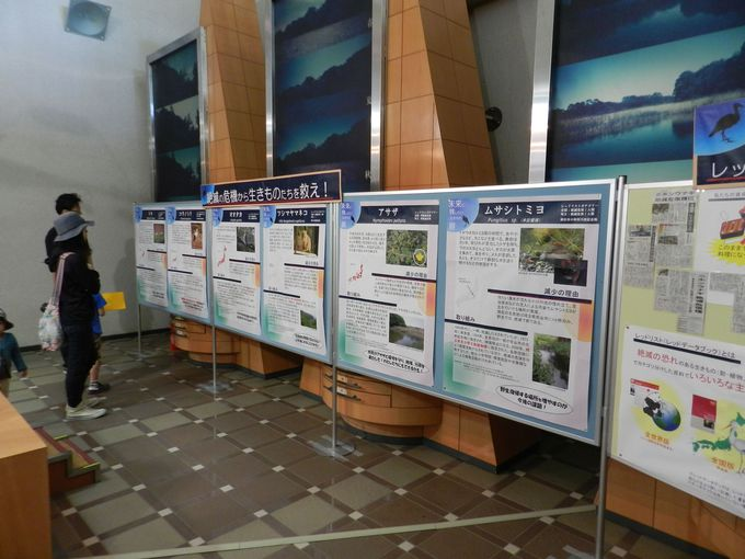 自然学習センターには、生きもの観察に役立つ情報がいっぱい