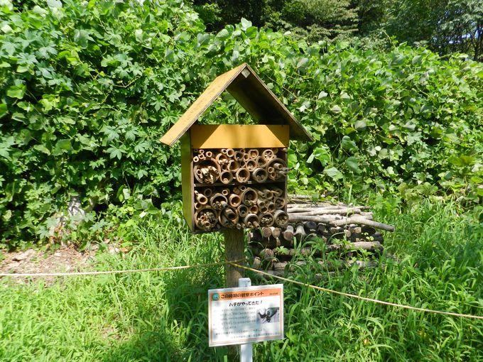 園路の目の前に、ハチのホテル?