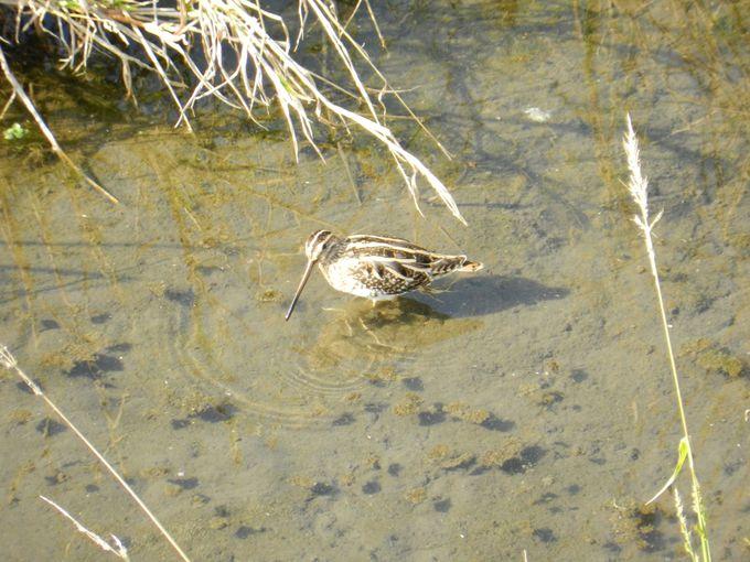 春夏秋冬、ビオトープには季節ごとに様々な野鳥が飛来します