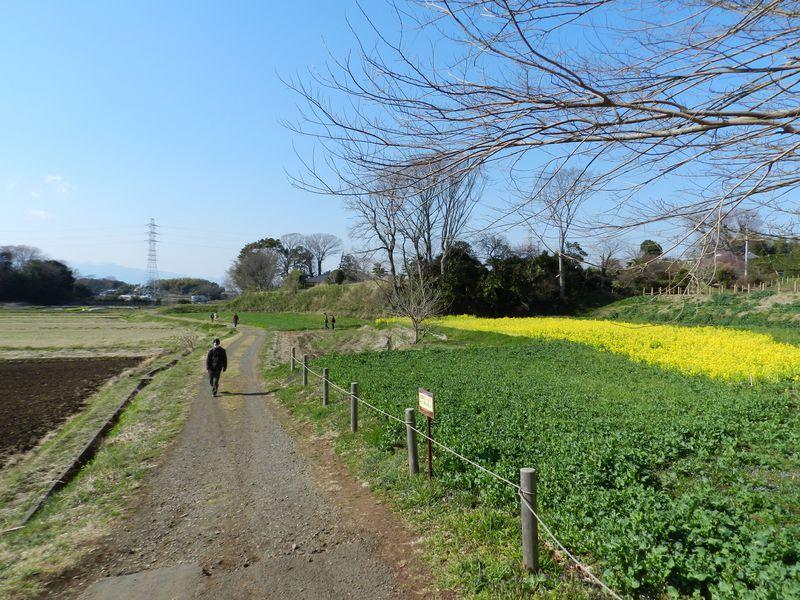 かつての農風景がここに! 神奈川・茅ヶ崎里山公園で鳥探し