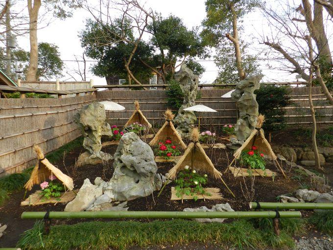 ボタンと石の庭園『湖石の庭』は、日中友好の証です