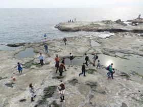 観光地・江ノ島の「足元」に注目! 磯の生きものを探そう
