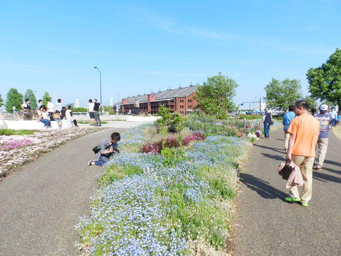 まだまだ見所満載。「花」に注目した横浜めぐりをぜひ!