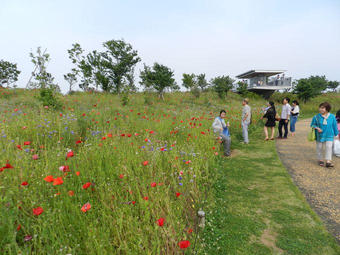 欧州の野の花畑を再現! 自然観満載の空間ここにあり