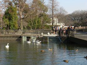 関東の水辺の生きものが集結! 井の頭自然文化園 水生物園|東京都|トラベルjp<たびねす>