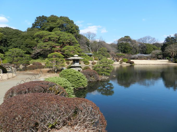 新宿新都心に残された、貴重な「緑の島」で