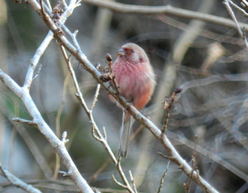 神奈川の秘境?宮ケ瀬湖・早戸川林道で冬の小鳥を探そう