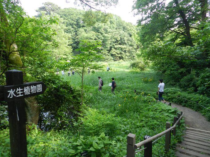 水生植物園を軸に、野趣あふれる緑に満ちた植物園です