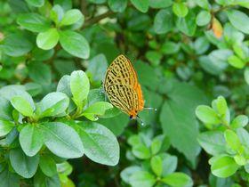 川崎市・生田緑地の初夏。森の宝石「ゼフィルス」に会おう!|神奈川県|トラベルjp<たびねす>