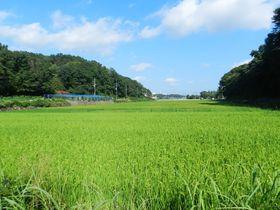 里山の雰囲気が広がる横浜「寺家ふるさと村」の原風景を巡る
