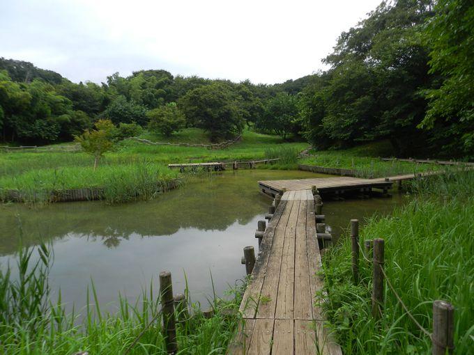 園内に散りばめられた水場を巡り歩いてみよう!