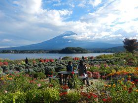 富士山の絶景を季節の花園と共に楽しむ河口湖畔「大石公園」|山梨県|トラベルjp<たびねす>