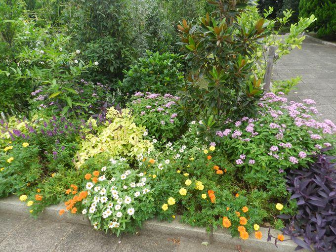 混植花壇をクローズアップ。どんな花があるかな?