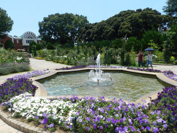 港の見える丘公園でも、バラ園を大幅リニューアル!