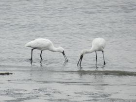 世界に数千羽だけの珍鳥を求め、冬の東京・葛西臨海公園へ|東京都|トラベルjp<たびねす>