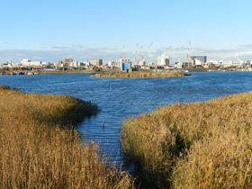 意外なほど自然が豊か! 水鳥の訪れる冬の多摩川河口へ|神奈川県|トラベルjp<たびねす>