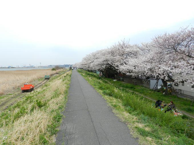 そして、春にはサクラ咲く