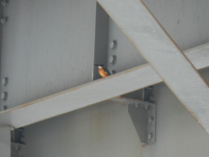 時には、ちょっと珍しい鳥に出合えることも……!?