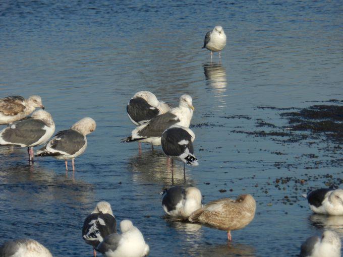 冬の酒匂川河口は、水鳥のユートピア
