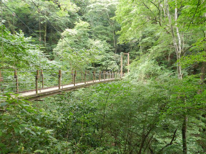 さまざまな生きものが暮らす、東京から一番近い山!