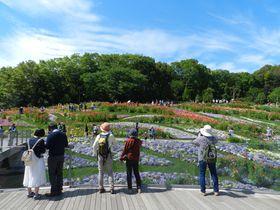 都市緑化よこはまフェア 里山ガーデンで花と緑に囲まれて…|神奈川県|トラベルjp<たびねす>