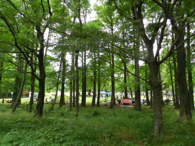 秋ヶ瀬公園は、森とスポーツの総合公園!