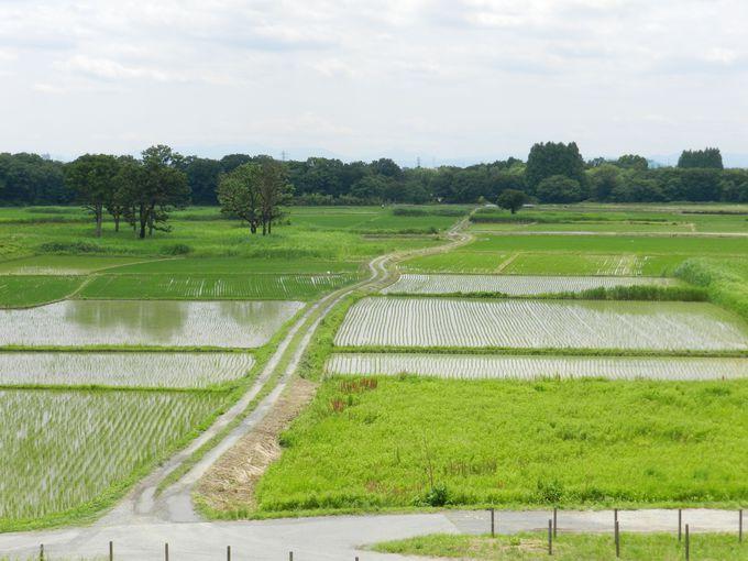 公園に隣接する、広大な田んぼもお見逃しなく