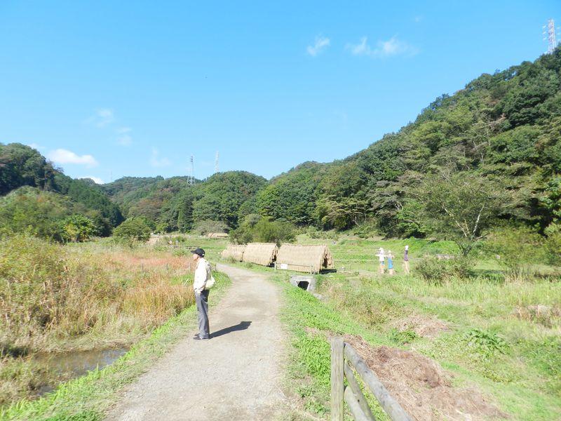 武蔵野の里山を堪能!あきる野市「横沢入里山保全地域」