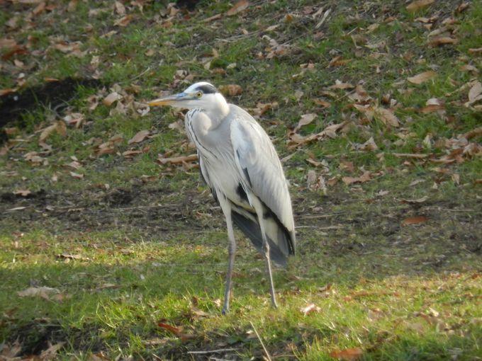 川沿いに暮らす大小の鳥たちをウォッチング