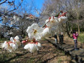 連なる川沿いの公園、武蔵野公園&野川公園で冬の自然散策!