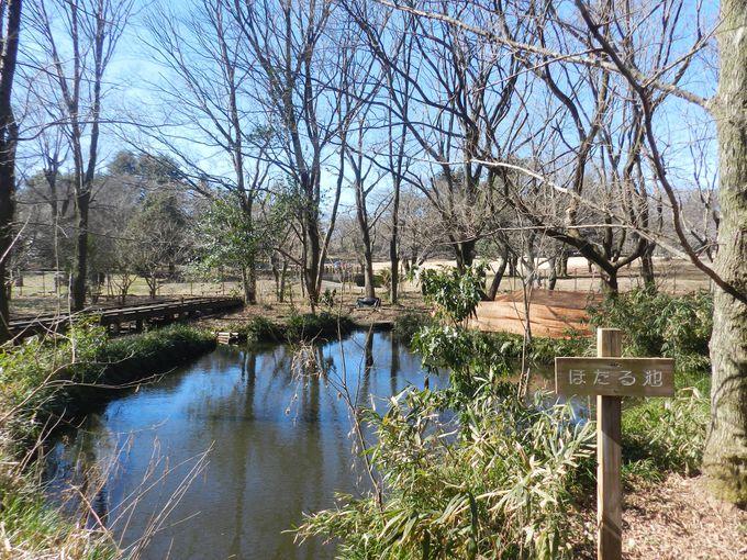 野川公園の自然観察園で、武蔵野の原風景を堪能!