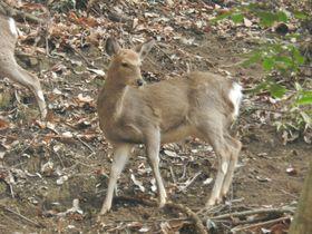 早春の「厚木自然観察園&七沢森林公園」で野生の動植物に会おう