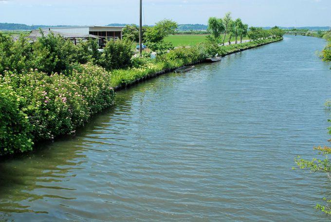 これぞ水郷巡り!「加藤州十二橋めぐり」は水郷観光の定番!