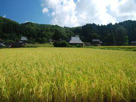 羽田空港から1時間!世界農業遺産、能登半島の里山をめぐる旅。