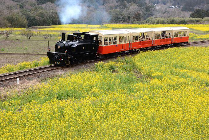 千葉「小湊鐡道」トロッコ列車から眺める菜の花の絨毯