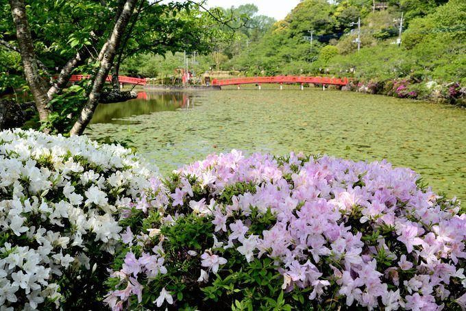 市の中心部に広がる「茂原公園」。水辺のツツジが美しい!
