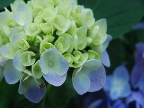 春から初夏が見頃!千葉県茂原市 花巡り彩りスポットベスト3|千葉県|トラベルjp<たびねす>