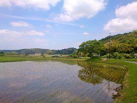 里山を抜けて癒しの森へ!千葉県市原市「米沢の森」ウォーキング