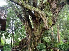 神秘の森と巨木の里を巡る!千葉県匝瑳市、自然と歴史を感じる旅|千葉県|トラベルjp<たびねす>