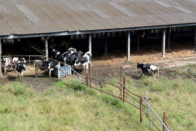 丘の上の緑に囲まれたチーズ工房「高秀牧場」
