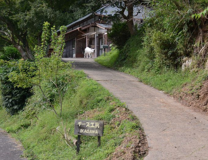 東京からの移住家族が経営する「チーズ工房IKAGAWA」